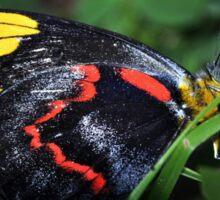 Butterfly (3) Sticker