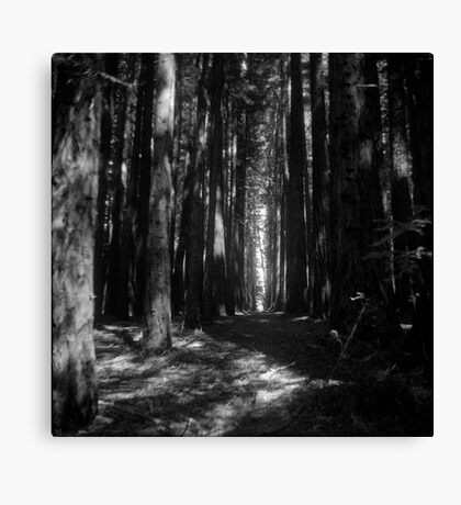Black and white forest Canvas Print