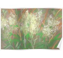 """White flowers"", summer plants, pastel painting, life sketch Poster"