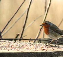 Hungry Robin by Vicki Spindler (VHS Photography)