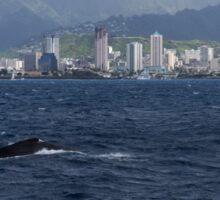 Whale Watching in Honolulu, Hawaii Sticker