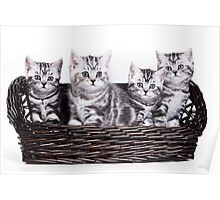 Four charming gray striped kitten British cat in a basket Poster