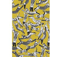 cat party ochre yellow Photographic Print