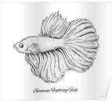 Siamese Fighting Fish Poster