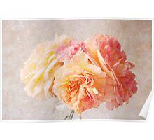 Textured Pastel Rose Poster