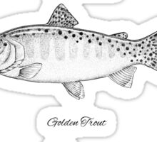 Trout Collection Sticker