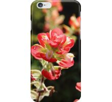 The Indian Paint Brush iPhone Case/Skin