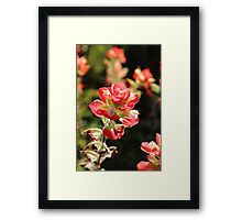 The Indian Paint Brush Framed Print