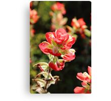 The Indian Paint Brush Canvas Print