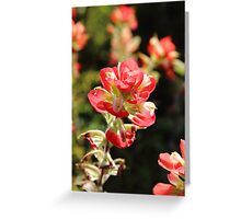 The Indian Paint Brush Greeting Card