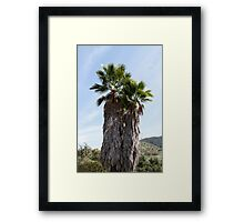 California Palms Framed Print