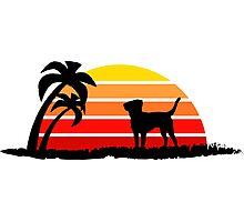 Labrador Retriever on Sunset Beach Photographic Print