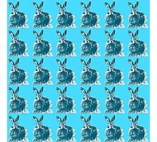 Blue Bunnies Photographic Print