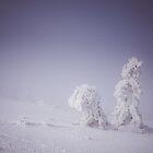 Snowy creatures by ewkaphoto