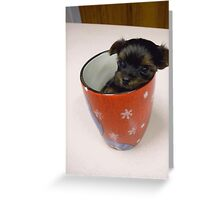 Tiny pup in cup!! Greeting Card