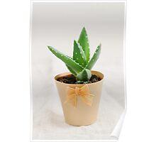 Mini succulent cactus Poster