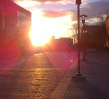 University Sunset - Golden Hour Sticker