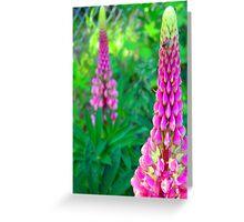 Luscious Lupin Greeting Card
