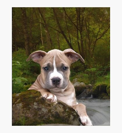 Pitbull Puppy Photographic Print