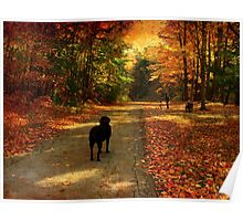 A lab in Fall Poster