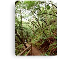 Tamalpais Hike Canvas Print