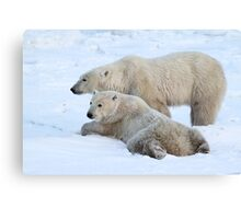 Polar Bear Mates Canvas Print