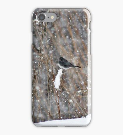 Dark-eyed Junco in the Snow Storm iPhone Case/Skin