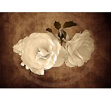 Vintage roses Photographic Print