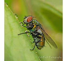 Wet Fly Photographic Print