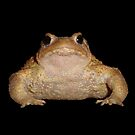 Bufo Bufo European Toad  Isolated by taiche