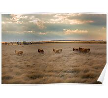 Cows Among the Grass Poster