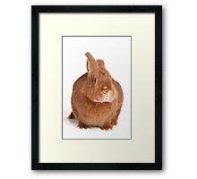 Funny red gray rabbit Framed Print