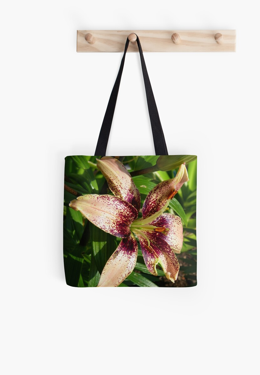 Salmon Pink lily by LoneAngel