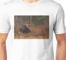 Algonquin Moose - Algonquin Park, Canada T-Shirt
