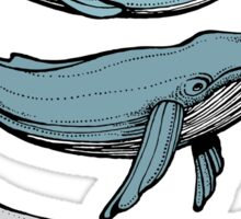 Three hand-drawn whales-friends Sticker
