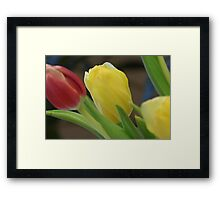 celebratory bouquet of tulips Framed Print