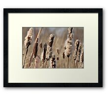 Dried Cattail Framed Print