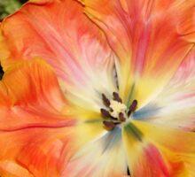 Queen of Tulips Sticker