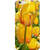 Field of Yellow Tulips iPhone Case/Skin