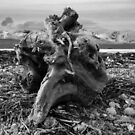 Driftwood #4 by appfoto
