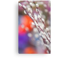 Easter Willow Branch of White Furry Catkins Canvas Print