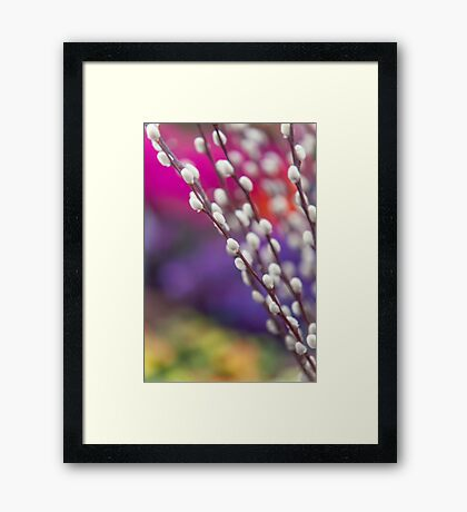 Spring Willow Branch of White Furry Catkins Framed Print