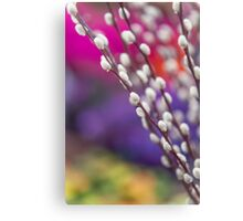 Spring Willow Branch of White Furry Catkins Canvas Print
