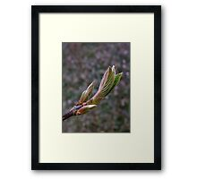 First signs of spring! Framed Print