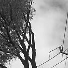 i'd rather be a living tree than a power pole by geof