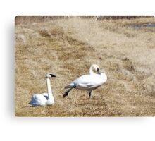 Swan Yoga Metal Print