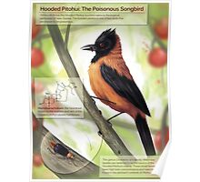 Hooded Pitohui: The Poisonous Songbird Poster