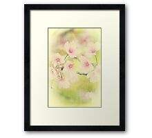 Dreamy Faded Vintage Pale Pink Sakura Cherry Blossoms Framed Print