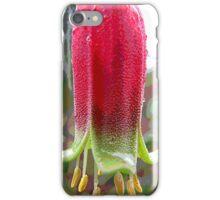 Wildflowers of East Gippsland: Correa iPhone Case/Skin