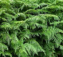 Fern texture background 1 by Sue Robinson